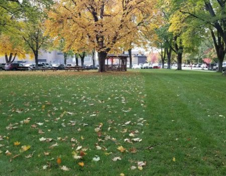 Fallservices With Superior Land And Lawn Care In Columbia Falls, MT